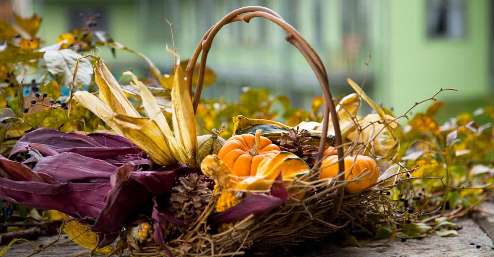 pumpkin-harvest-basket